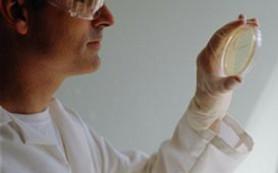 Шестеро детей в Латвии подхватили редкую инфекцию — туляремию