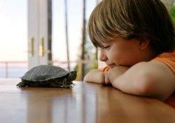 Забавным черепашкам не место в доме, где есть дети: они источник опасных бактерий
