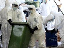 Юг Китая оказался во власти вируса птичьего гриппа