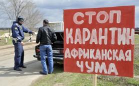 Россельхознадзор выявил новую вспышку африканской чумы свиней на Кубани
