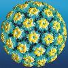 Cоздана вакцина для лечения папилломавирусной инфекции