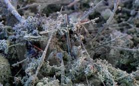 Бактериальный белок в домашней пыли провоцирует астму, не являясь аллергеном