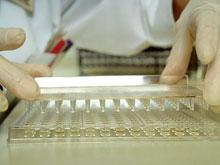 Новая методика расшифровки гена вирусов работает лучше старой, уверены эксперты