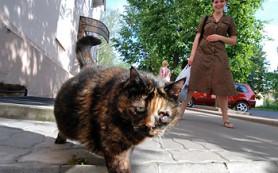 Бездомные кошки и собаки заражают новгородцев микроспорией