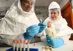 Создана новая эффективная вакцина против птичьего гриппа