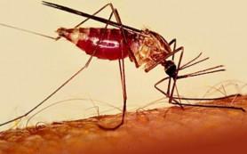 Недостаточное финансирование может обернуться эпидемие малярии