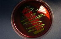 Иммунологическое исследование проливает свет на функцию и реакцию клетки