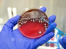 ЕС дал «добро» на использование универсальной вакцины против менингита типа В