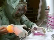 «Вектор» разрабатывает новые вакцины от опасных инфекций