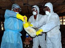 Мир находится в двух шагах от новой пандемии гриппа