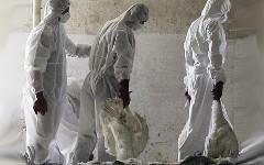 Неизвестный штамм птичьего гриппа убил двух жителей Китая