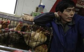 Вирус птичьего гриппа H7N9 чрезвычайно опасен