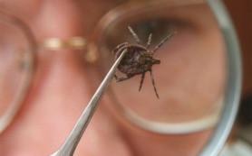 Тюменцы могут исследовать клещей на энцефалит в спецлаборатории