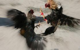 «Новый» птичий грипп демонстрирует «характер»: неужели он не поддается лечению?