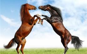 В связи с гриппом лошадей в Монголии в 5 приграничных районах Бурятии будут проведены специальные профилактические мероприятия