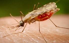 На московских пляжах нашли малярию