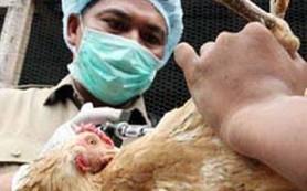 В Китае от «птичьего» гриппа умер каждый третий заболевший