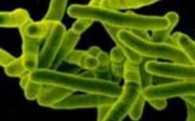 Бактерии туберкулеза станут термофобами