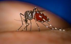 Кубинские ученые приблизились к созданию вакцины от лихорадки денге