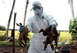 Скоро! Новая вакцина от птичьего гриппа