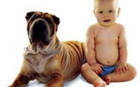 Собаки укрепляют детский иммунитет