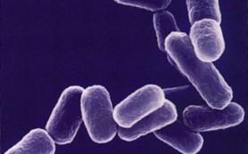 Домашние микробы: как им противостоять