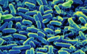В области выросли энтеровирусные инфекции и сальмонеллез