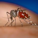 Флориде грозит эпидемия лихорадки денге и чикунгуньи