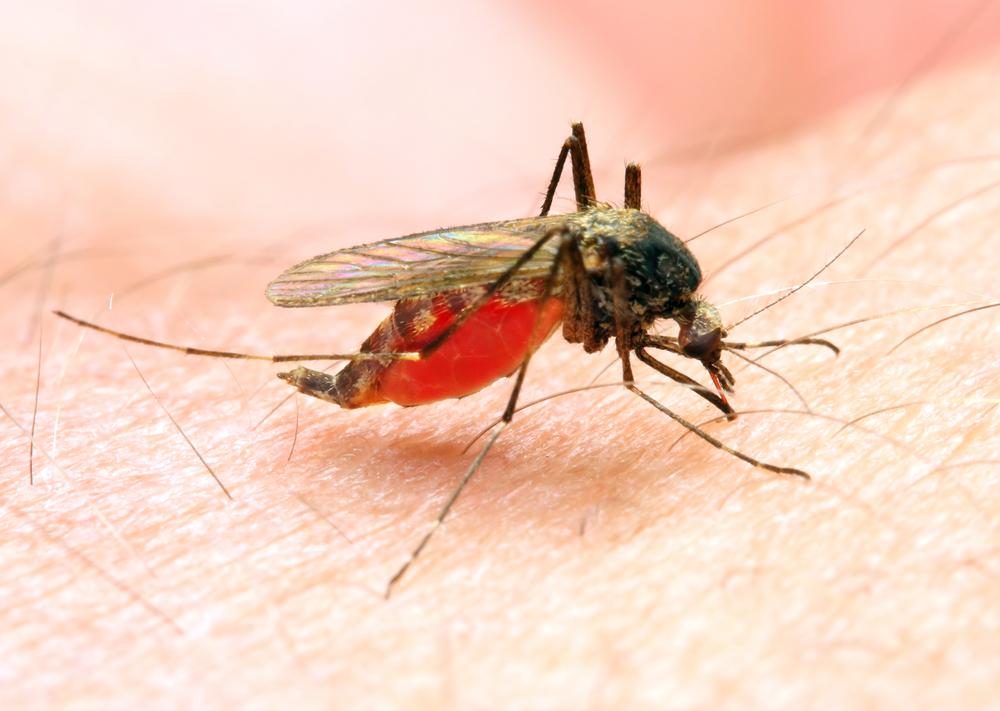 Вакцина против малярии в скором времени появится в аптеках
