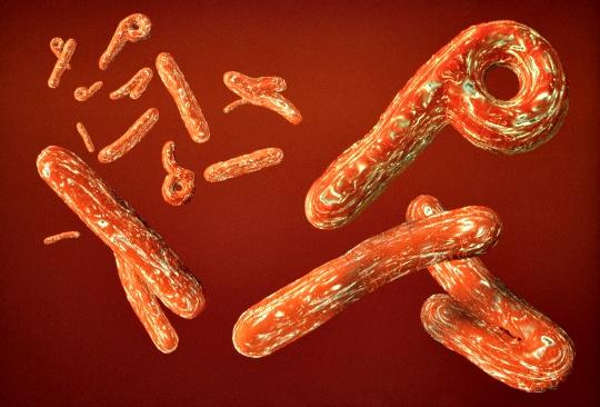 Лихорадка Эбола неизлечима, но не безнадежна