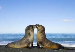Туберкулез в Америке: виноваты тюлени и морские львы