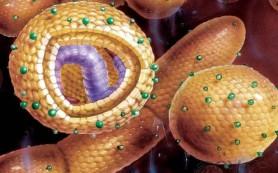 Гепатит С через 22 года станет редким заболеванием