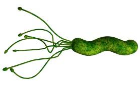 Разработано эффективное наносредство против Helicobacter pylori