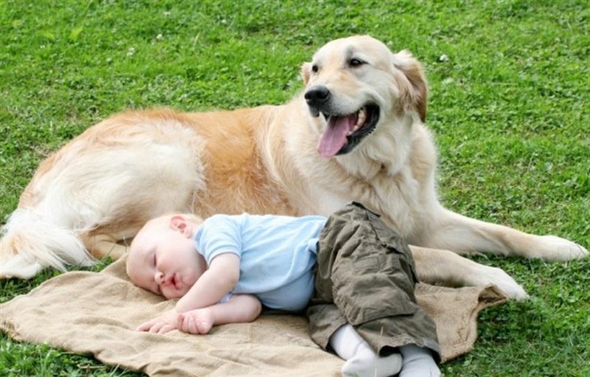 Домашние животные защищают детей от инфекций