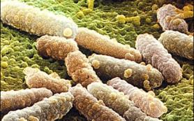 Стафилококковая инфекция. – (Заболевание)