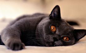 Любовь к кошкам вызывает паразитарная инфекция