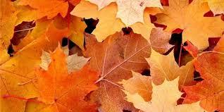 Сценарий осеннего бала — почему он необходим при подготовке праздника?