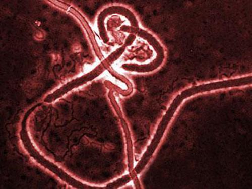 Российская вакцина против лихорадки Эбола может быть испытана в Африке