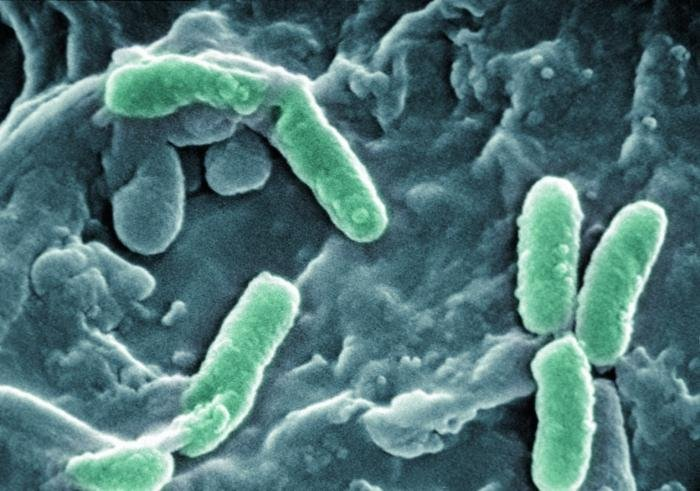 Биологи изучили влияние серебра на бактерии