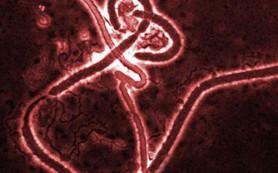 В Гвинее выписан последний пациент с лихорадкой Эбола