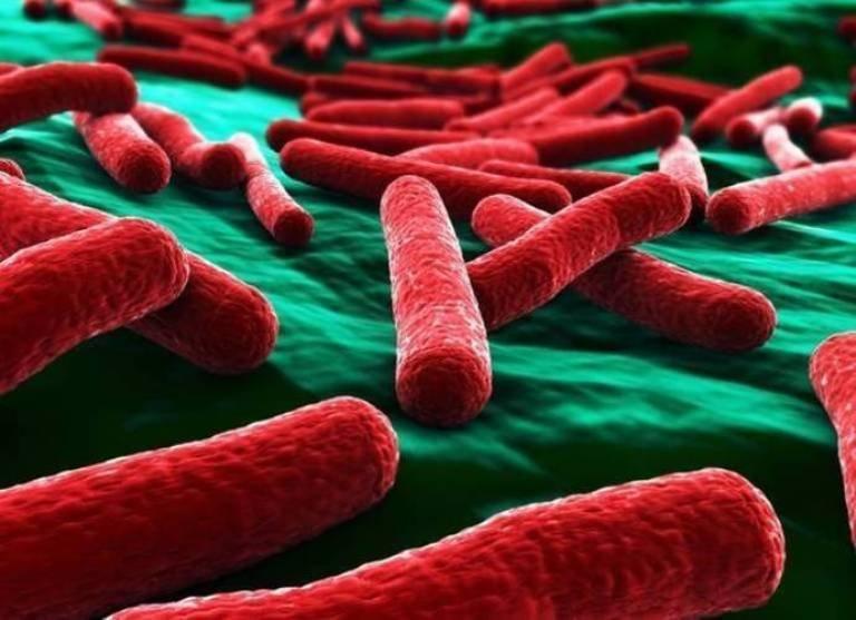 Как бактерии быстрее попадают в кровь