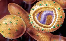 Родители иногда принимают гепатит А за грипп