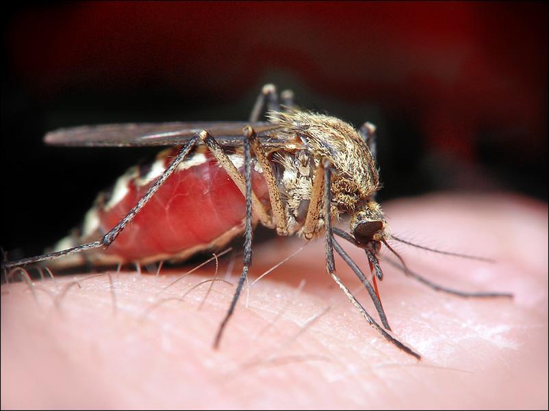 Вирус Зика оказался связан с нарушениями развития плода