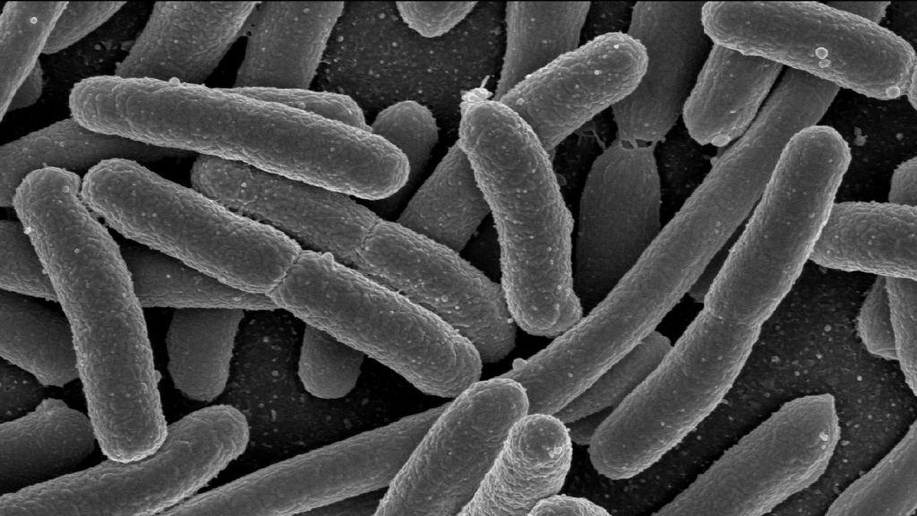 Обнаружена бактерия, устойчивая к самому сильному антибиотику