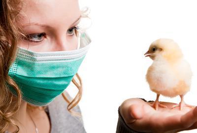Во Франции «проснулся» птичий грипп