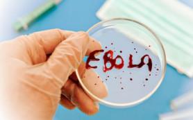 В Западной Африке зарегистрирован новый случай смерти от лихорадки Эбола