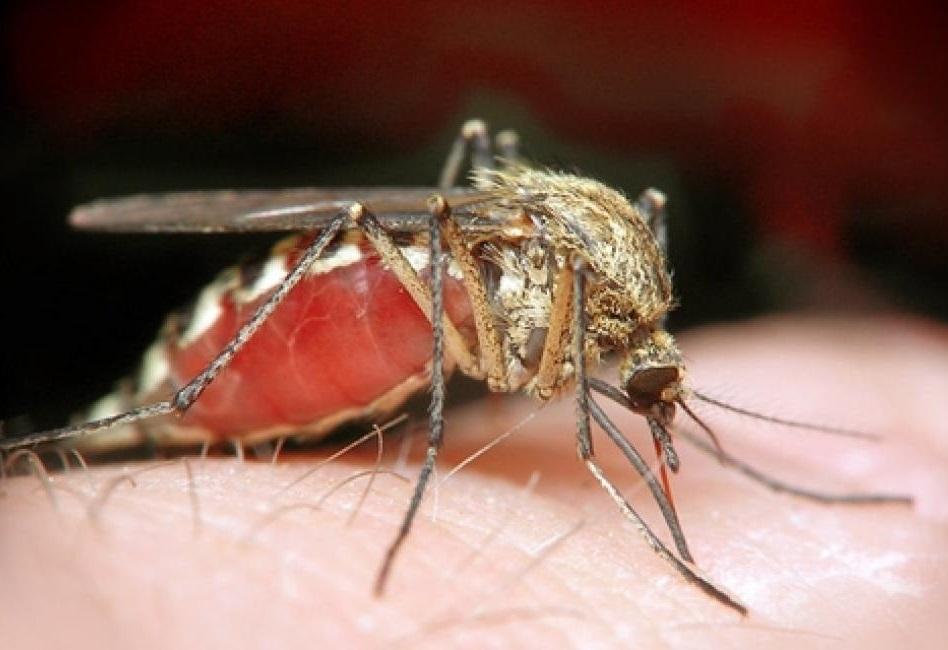 ВОЗ признала вспышку вируса Зика чрезвычайной ситуацией