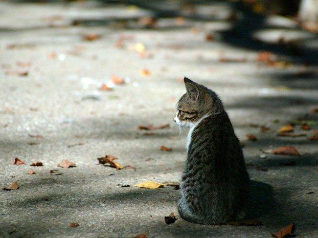 Что делать, если пропала домашняя кошка?