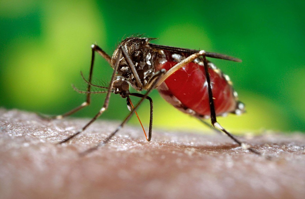 Описан случай развития менингоэнцефалита на фоне заражения вирусом Зика