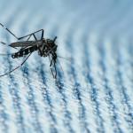 Канадские ученые тестируют вирус Зика на местных комарах